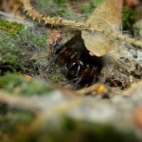 Pavoučkovo hnízdo
