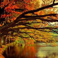 Krásné jsou barvy podzimu