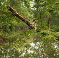 Lužní les - Přírodní rezervace Rezavka