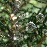 Pavučina z diamantů