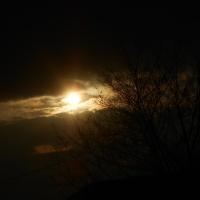 Sun & trees