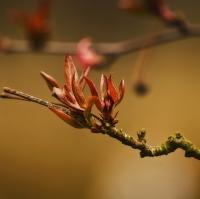 Jaro je tu....