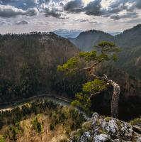 Sokolica - topmodelka mezi stromy :)