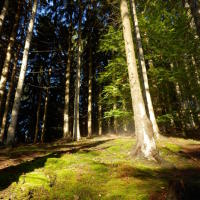 Ranní procházka lesem