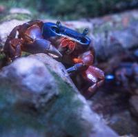 Krab ten težkej život má....