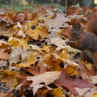 Fotíme podzim aneb hurá za veverkama