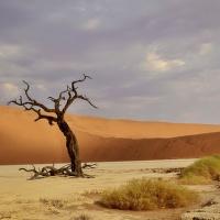 poušť Sossusvlei Namíbie - údolí Deadvlei. Druhý den po písečné bouři foukal silný vítr a nasvícení dun se měnilo joko při promítání filmu.