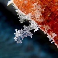 kouzlo zimní přírody