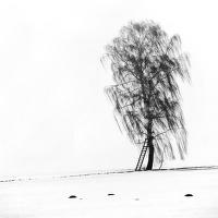 Osamělý