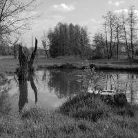Pustějovský rybník II