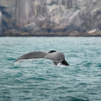 kousek velryby