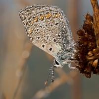 motýľkovo 4