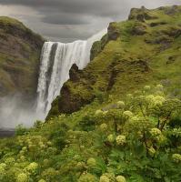 obrázky z islandské přírody 11 aneb ... šedesátimetrový vodopád a bujná vegetace
