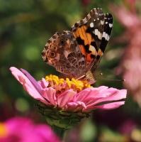 Motýlí zahrádka...