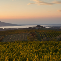 Dornfelder, Chardonnay, Pálava, Ryzlink rýnský :-)