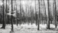 Černobílý les