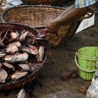 Fishmarkt v Negombu IV
