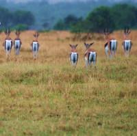 Afrika zezadu ... 2