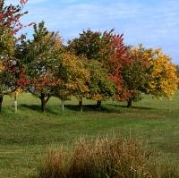 Paleta podzimu