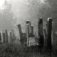 Hřbitůvka listopadová