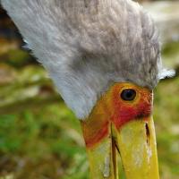 Exotický ptáček