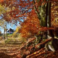 Podzimní z Krušných hor