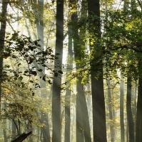 Lesní jezero III.