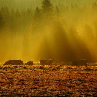Na Šumavských pastvinách, když slunce se probouzí...