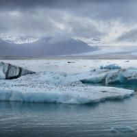 obrázky z islandské přírody 39 aneb ... plovoucí parkoviště rybáků