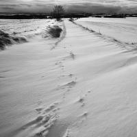 Sněhová cesta ...