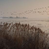 Mrazivá přírodní rezervace Mušov :-)