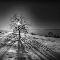 Ve stínu
