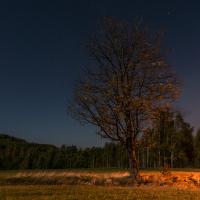 Samotář v nočním větru