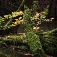 Lužní les III - Přírodní rezervace Rezavka
