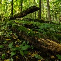 Lužní les XVIII - Přírodní rezervace Polanský les