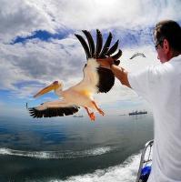 dotknout se ptáka ...