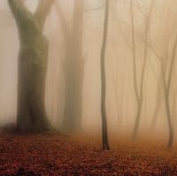 Jesenné impresie