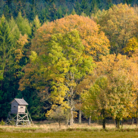 Podzim v Brdech