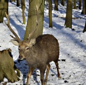 ochránce lesa