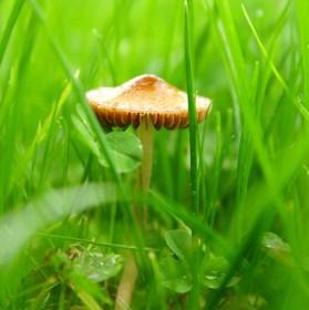 Houbička v trávě