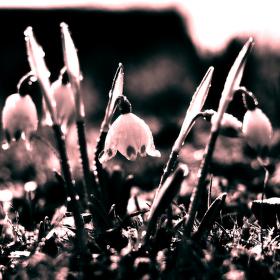 Jaro přichází...