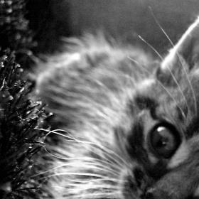 Kočičí kuk