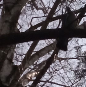 holubí odraz