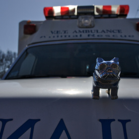 Zvireci ambulance