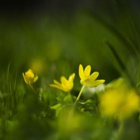 Konečně jaro :)