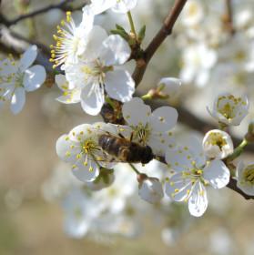 Konečně jaro....