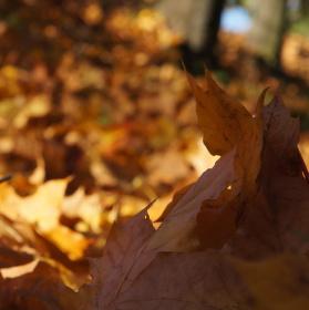 podzim je nádherný