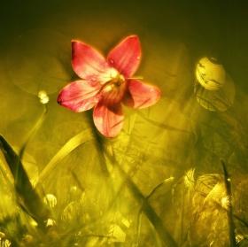 Luční poézie