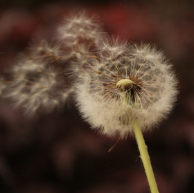 Síla větru