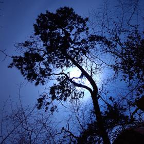Měsíc za temnou borovicí